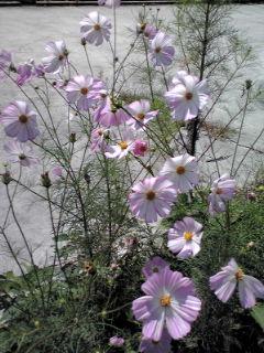 花のエネルギー